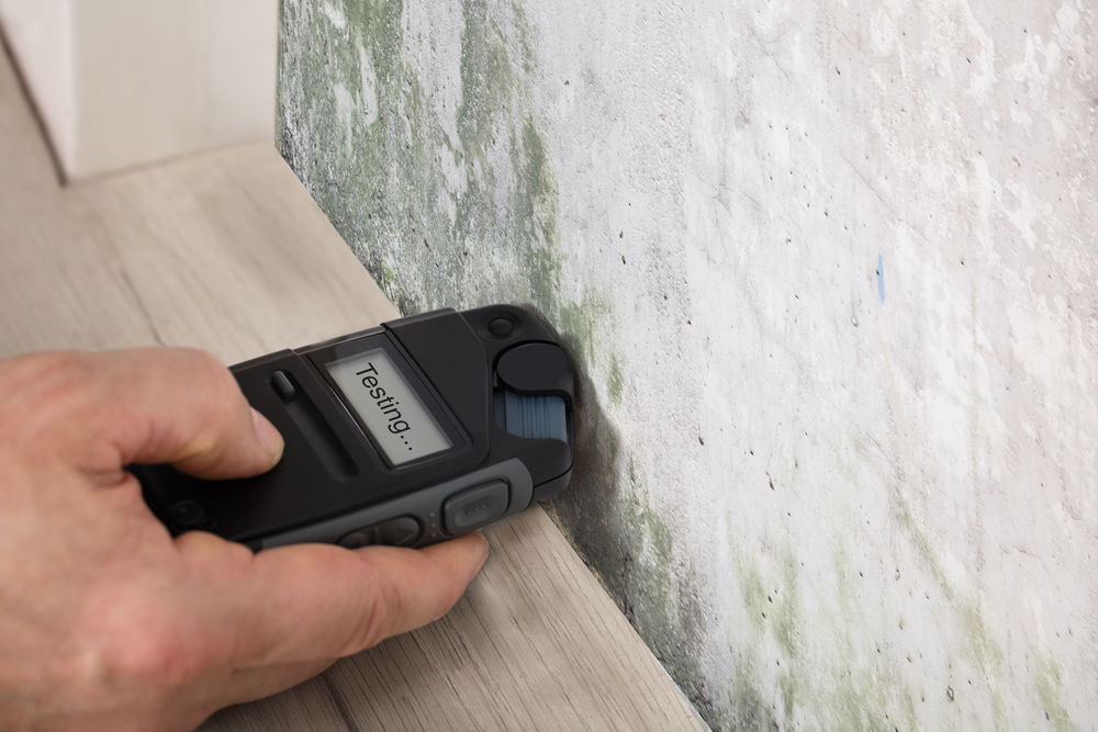 Mold removal professionals can test the wetness for mold
